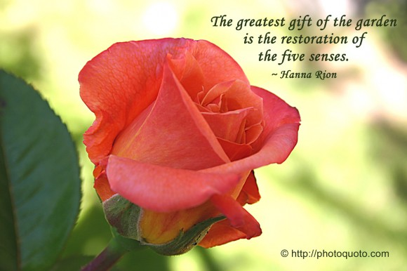 The greatest gift of the garden is the restoration of the five senses. ~ Hanna Rion