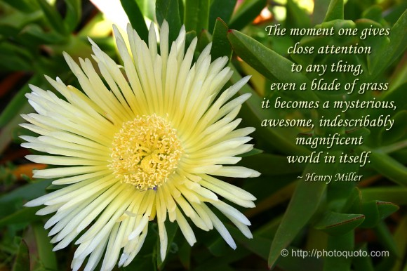The moment one gives close attention to any thing, even a blade of grass it becomes a mysterious, awesome, indescribably magnificent world in itself. ~ Henry Miller