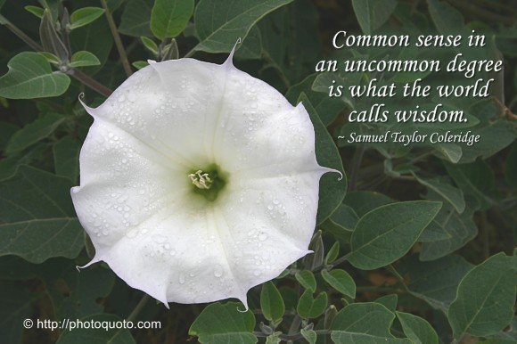 Common sense in an uncommon degree is what the world calls wisdom. ~ Samuel Taylor Coleridge