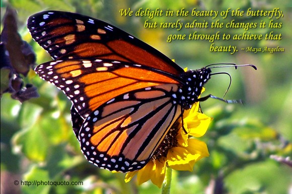 We delight in the beauty of the butterfly, but rarely admit the changes it has gone through to achieve that beauty. ~ Maya Angelou
