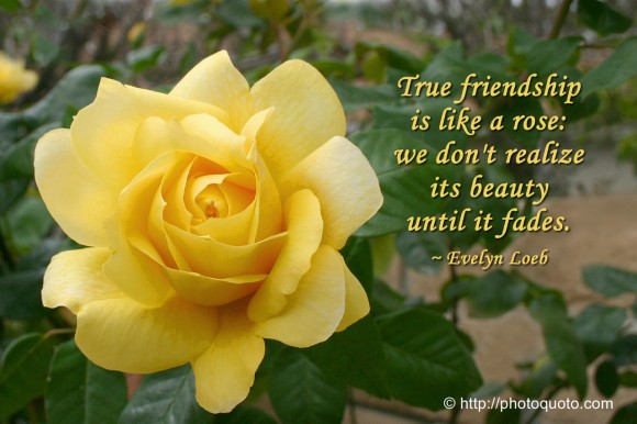True friendship is like a rose: we don,t realize its beauty until it fades. ~ Evelyn Loeb