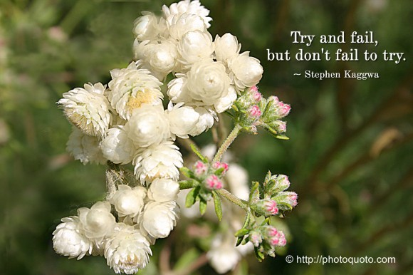 Try and fail, but don't fail to try. ~ Stephen Kaggwa
