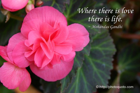 Where there is love there is life. ~ Mohandas Gandhi