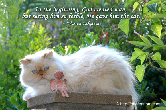 In the beginning, God created man, but seeing him so feeble, He gave him the cat. ~ Warren Eckstein