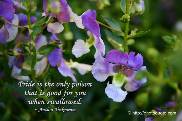 Pride is the only poison that is good for you when swallowed. ~ Author Unknown