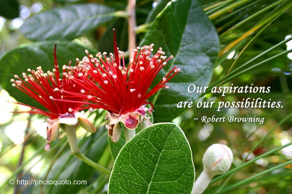 Our aspirations are our possibilities. ~ Robert Browning