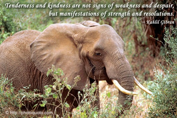 Tenderness and kindness are not signs of weakness and despair, but manifestations of strength and resolutions. ~ Kahlil Gibran