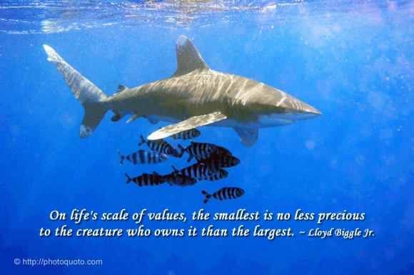 On life's scale of values, the smallest is no less precious to the creature who owns it than the largest. ~ Lloyd Biggle Jr.