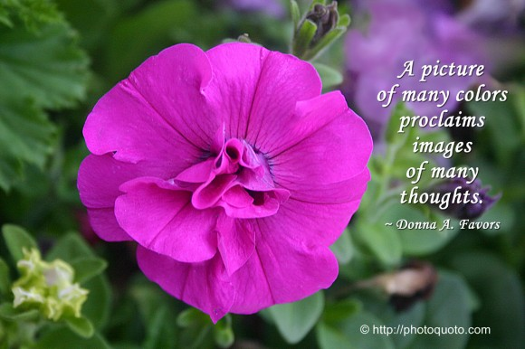 A picture of many colors proclaims images of many thoughts. ~ Donna A. Favors