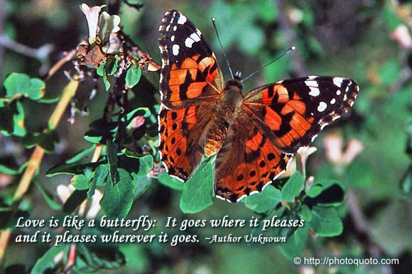 quotes about unknown love. Love is like a butterfly: It goes where it pleases and it pleases wherever