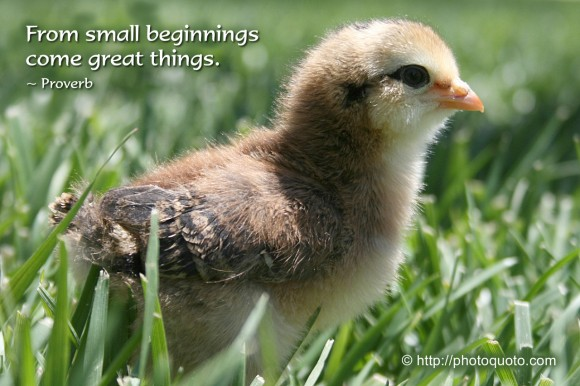 From small beginnings come great things. ~ Proverb