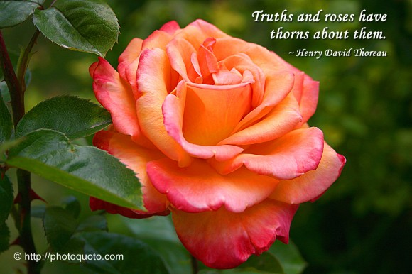 Truths and roses have thorns about them. ~ Henry David Thoreau