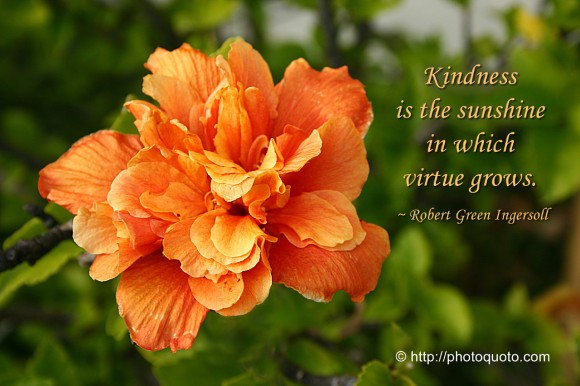 Kindness is the sunshine in which virtue grows. ~ Robert Green Ingersoll