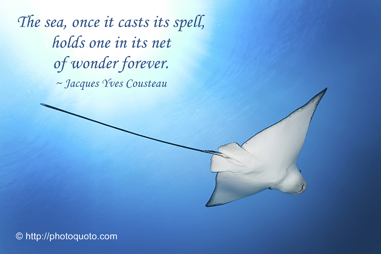 Quote About The Sea: Mermaid Ocean Quotes. QuotesGram