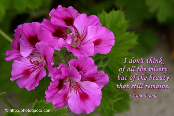 I don't think of all the misery but of the beauty that still remains. ~ Anne Frank