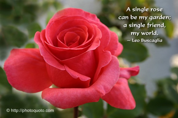 A single rose can be my garden; a single friend, my world. ~ Leo Buscaglia