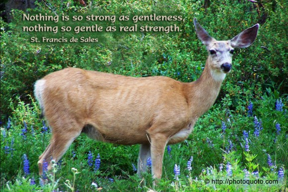 Nothing is so strong as gentleness, nothing so gentle as real strength. ~ St. Francis de Sales