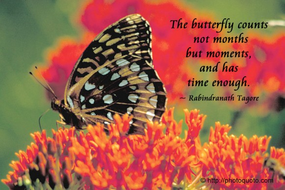 The butterfly counts not months but moments, and has time enough. ~ Rabindranath Tagore