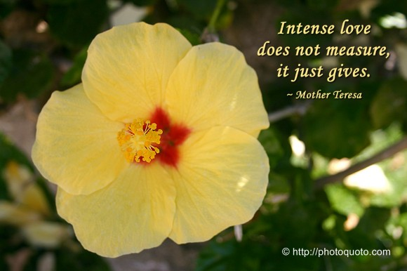 Intense love does not measure, it just gives. ~ Mother Teresa