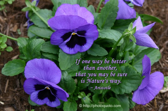 If one way be better than another, that you may be sure is Nature's way. ~ Aristotle