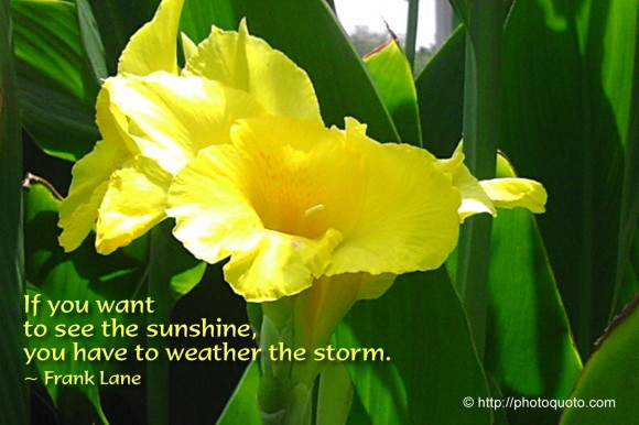 If you want to see the sunshine, you have to weather the storm. ~ Frank Lane