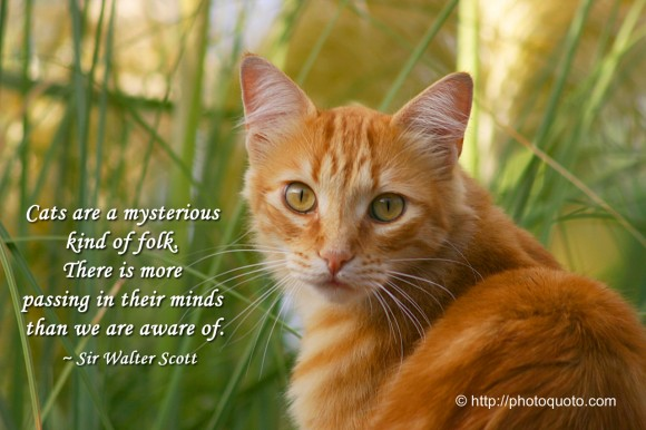 Cats are a mysterious kind of folk. There is more passing in their minds than we are aware of. ~ Sir Walter Scott