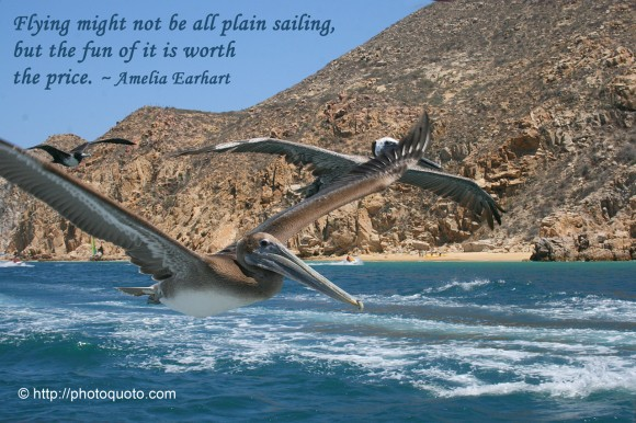 Flying might not be all plain sailing, but the fun of it is worth the price. ~  Amelia Earhart