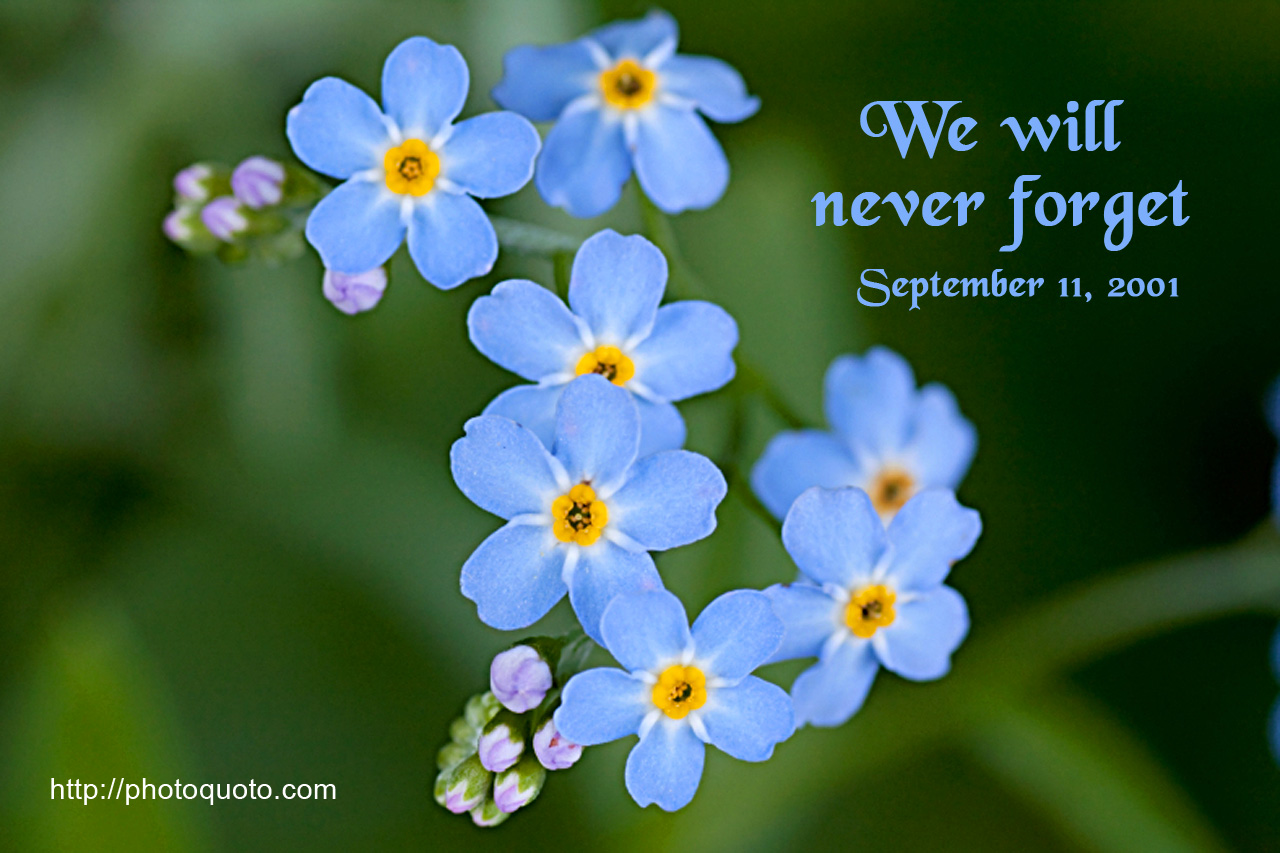 September 11th quotes quotes about september 11th sayings about - September 11 2001 View Full Size