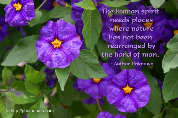 The human spirit needs places where nature has not been rearranged by the hand of man. ~ Author Unknown