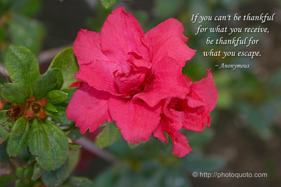 If you can't be thankful for what you receive, be thankful for what you escape. ~ Anonymous