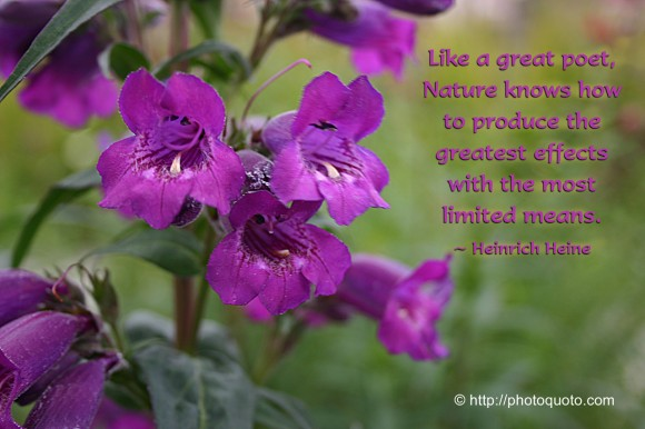 Like a great poet, Nature knows how to produce the greatest effects with the most limited means. ~ Heinrich Heine