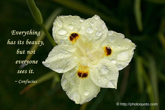 Everything has its beauty, but not everyone sees it. ~ Confucius