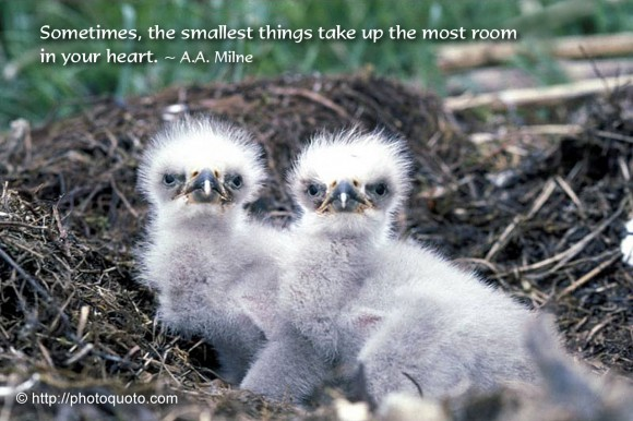 Sometimes, the smallest things take up the most room in your heart. ~ A.A. Milne