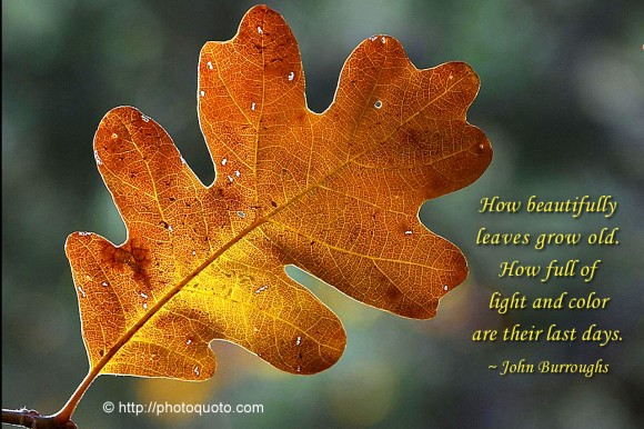 How beautifully leaves grow old.  How full of light and color are their last days. ~ John Burroughs