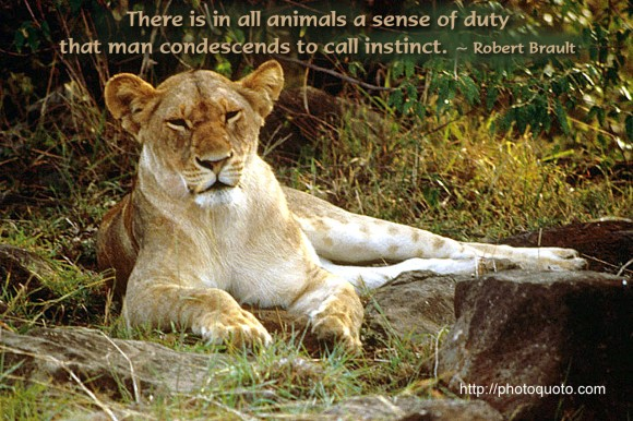 There is in all animals a sense of duty that man condescends to call instinct. ~ Robert Brault