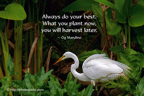 Always do your best. What you plant now, you will harvest later. ~  Og Mandino