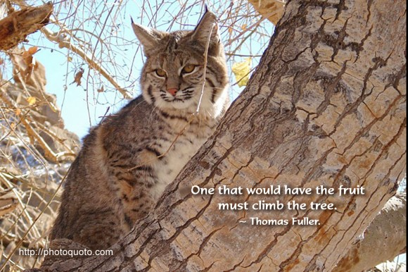 One that would have the fruit must climb the tree. ~ Thomas Fuller