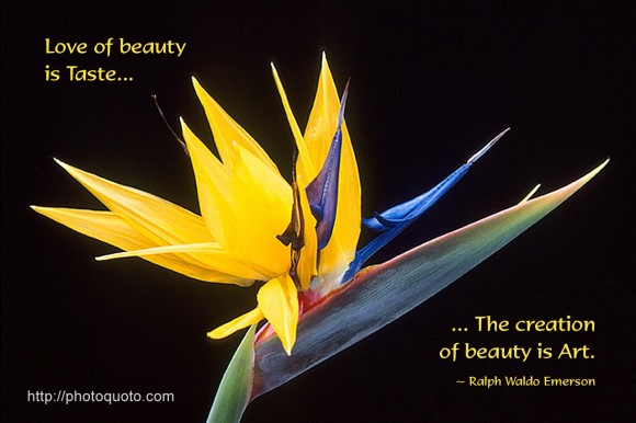 Love of beauty is Taste. The creation of beauty is Art. ~ Ralph Waldo Emerson