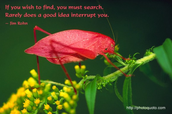 If you wish to find,you must search.Rarely does a good idea interrupt you. ~ Jim Rohn
