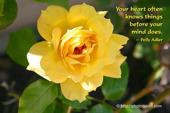 Your heart often knows things before your mind does. ~ Polly Adler