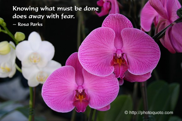 Knowing what must be done does away with fear. ~  Rosa Parks.
