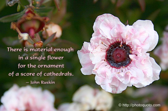 There is material enough in a single flower for the ornament of a score of cathedrals. ~ John Ruskin