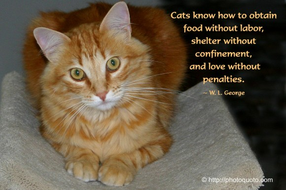 Cats know how to obtain food without labor, shelter without confinement, and love without penalties. ~ W. L. George