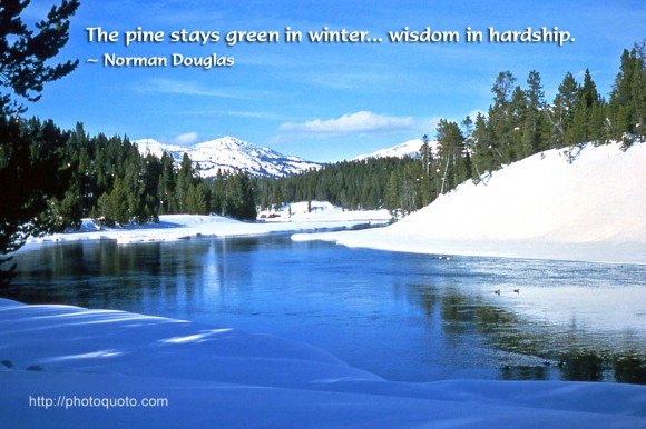 The pine stays green in winter... wisdom in hardship. ~ Norman Douglas