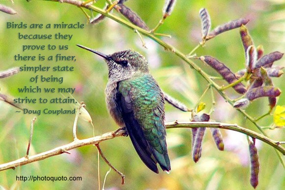 Birds are a miracle because they prove to us there is a finer, simpler state of being which we may strive to attain. ~ Doug Coupland