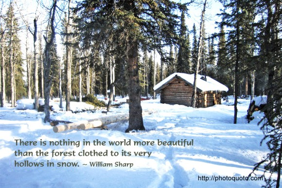 There is nothing in the world more beautiful than the forest clothed to its very hollows in snow. ~ William Sharp