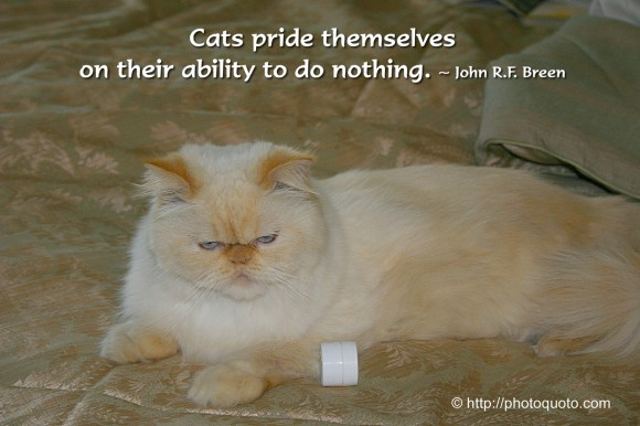 Cats are absolute individuals, with their own ideas about everything, including the people they own. ~ John Dingman