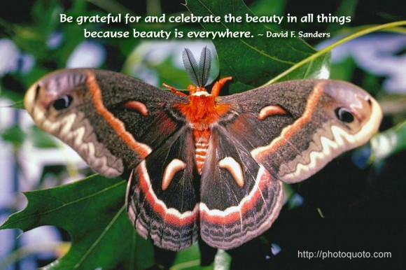 Be grateful for and celebrate the beauty in all things because beauty is everywhere. ~ David F. Sanders