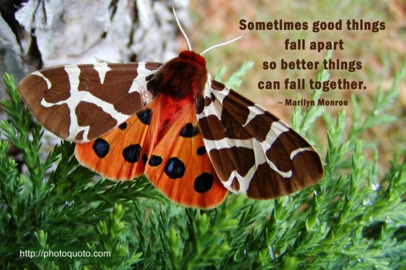 Sometimes good things fall apart so better things can fall together. ~ Marilyn Monroe