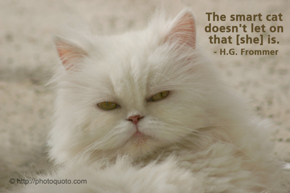 The smart cat doesn't let on that [she] is. ~ H.G. Frommer